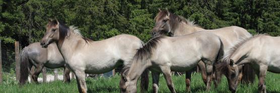 animaux_cheval-bando